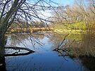 Cattail Marsh by Greg Belfrage