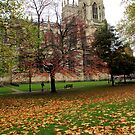 York Minster in Autumn  by rsangsterkelly