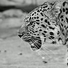 B&W Amur by Mark Hughes