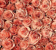 Vintage Roses by Anne Staub