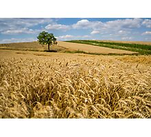 Wheat and A Tree Photographic Print