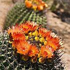 Orange Bloom by Rob Atkinson