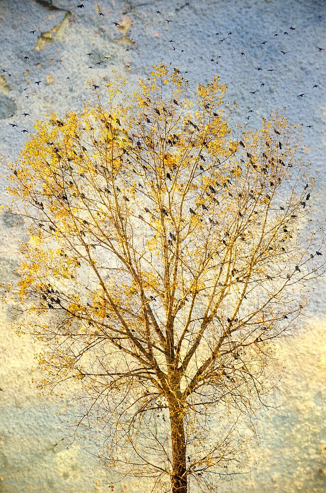 The Bird Tree by Paula Belle Flores
