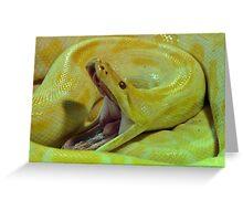 Albino Burmese Python Greeting Card