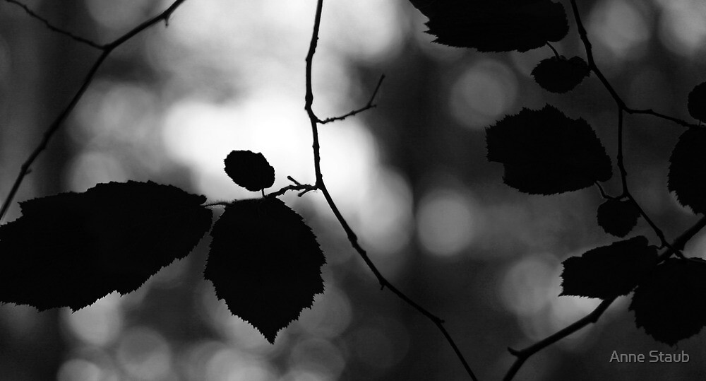 Light  by Anne Staub