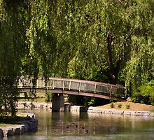 The Footbridge in the Park by Robin Webster
