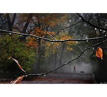 Park Stroll Photographic Print