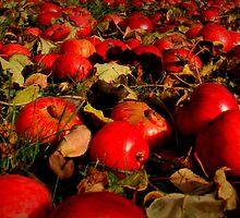 apples by katacharin