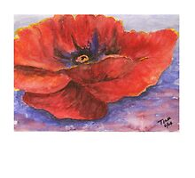 Red Poppy by TinaGraphics