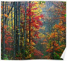 FOREST,AUTUMN-TREMONT Poster