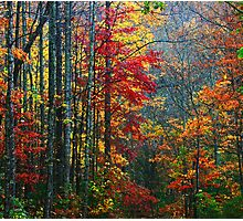 FOREST,AUTUMN-TREMONT Photographic Print