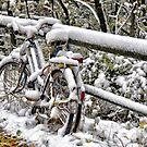 Seasons Change by Kasia-D