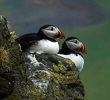 Puffins by Steve Oldham