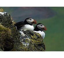 Puffins Photographic Print