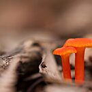 Orange mushroom by César Torres