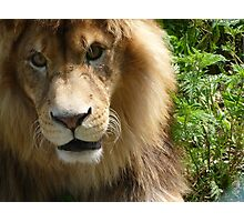 His Majesty the Kitty King Photographic Print