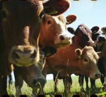 Cow Line Sticker