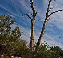 V-tree by Rob Atkinson