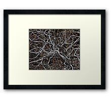 Twisted Limbs Framed Print