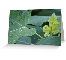 Rain drops on fig leaves Greeting Card