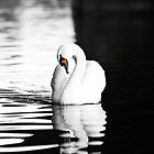 Swan Lake by amieanderson