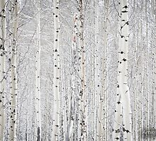 Snow Forest by amieanderson