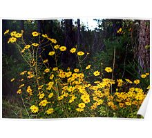 Forest daisies Poster