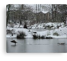 Duck Chase Canvas Print