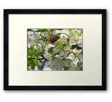 Once upon a Butterfly Framed Print