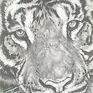 Up Close Tiger by BarbBarcikKeith