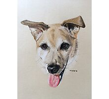 Maye - the beautiful little Jack Russell Terrier Photographic Print