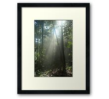 Shafts of Sunlight Through Borneo Jungle Mist Framed Print