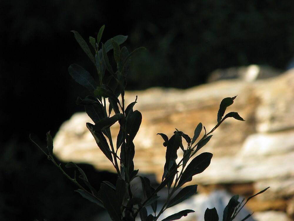 Black Leaves at Bear Creek by Chris Gudger