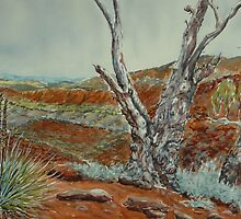 Acacia Ridge, Arkaroola, Flinders Ranges by Virginia  Coghill