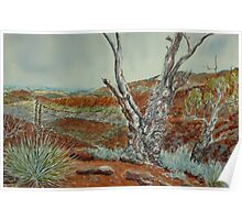 Acacia Ridge, Arkaroola, Flinders Ranges Poster