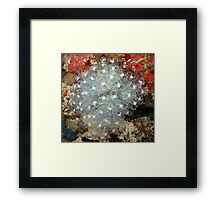 White Ascidians Framed Print