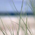 Beach grass abstract 2 by Phillip Shannon
