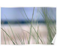 Beach grass abstract 2 Poster