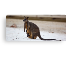 Beach Visitor - Green Patch Beach, NSW Canvas Print