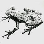 frog by Rebecca Koller