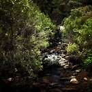 John Forrest National Park // 3 by Evan Jones