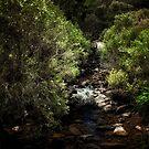 John Forrest National Park // 3 by Evan Jones