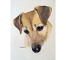 Millie the beautiful little JRT Photographic Print