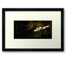 Insect gathering pollen Framed Print