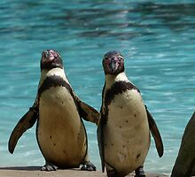 Penguins by NickSG
