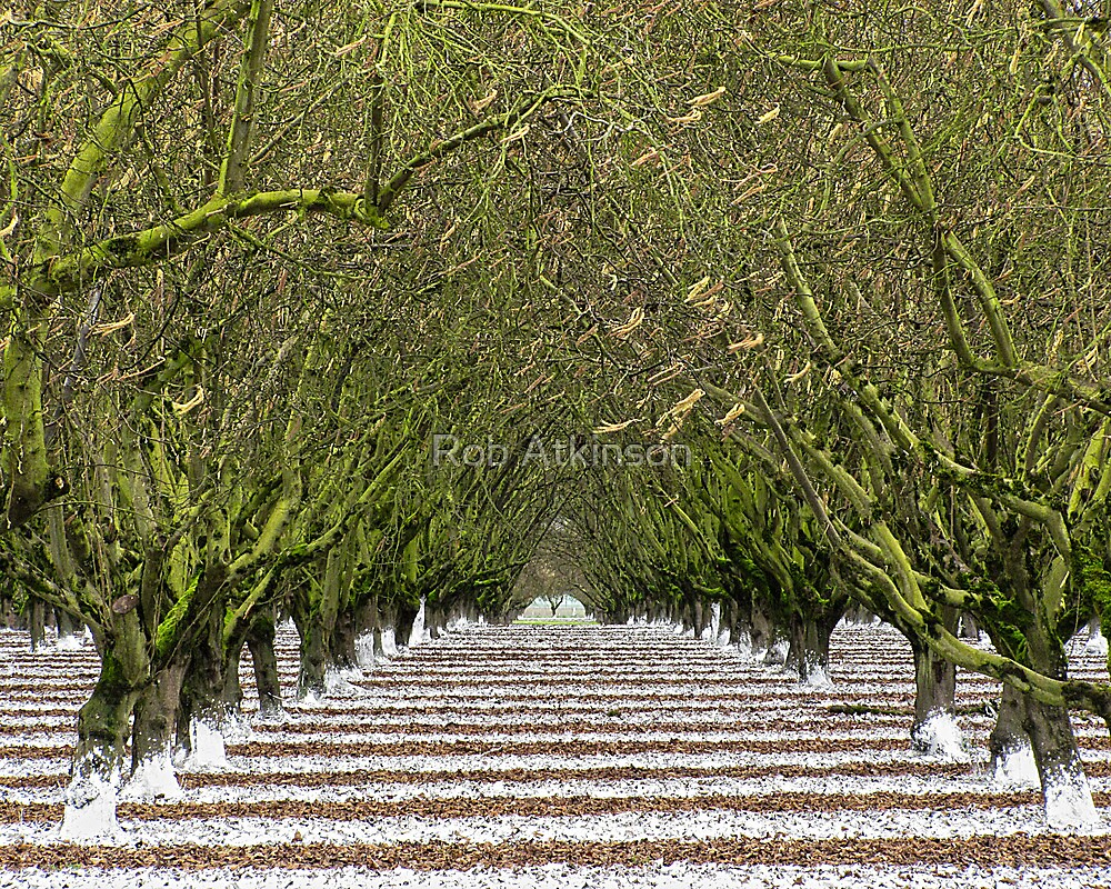 Striped Orchard by Rob Atkinson