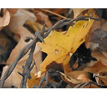 Rusty Barbed Wire Photographic Print