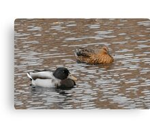 Cold Floaters  Canvas Print