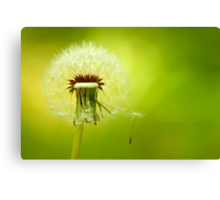 A Dandelion Blown By The Wind Canvas Print
