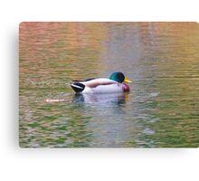 Reflecto Duck Canvas Print